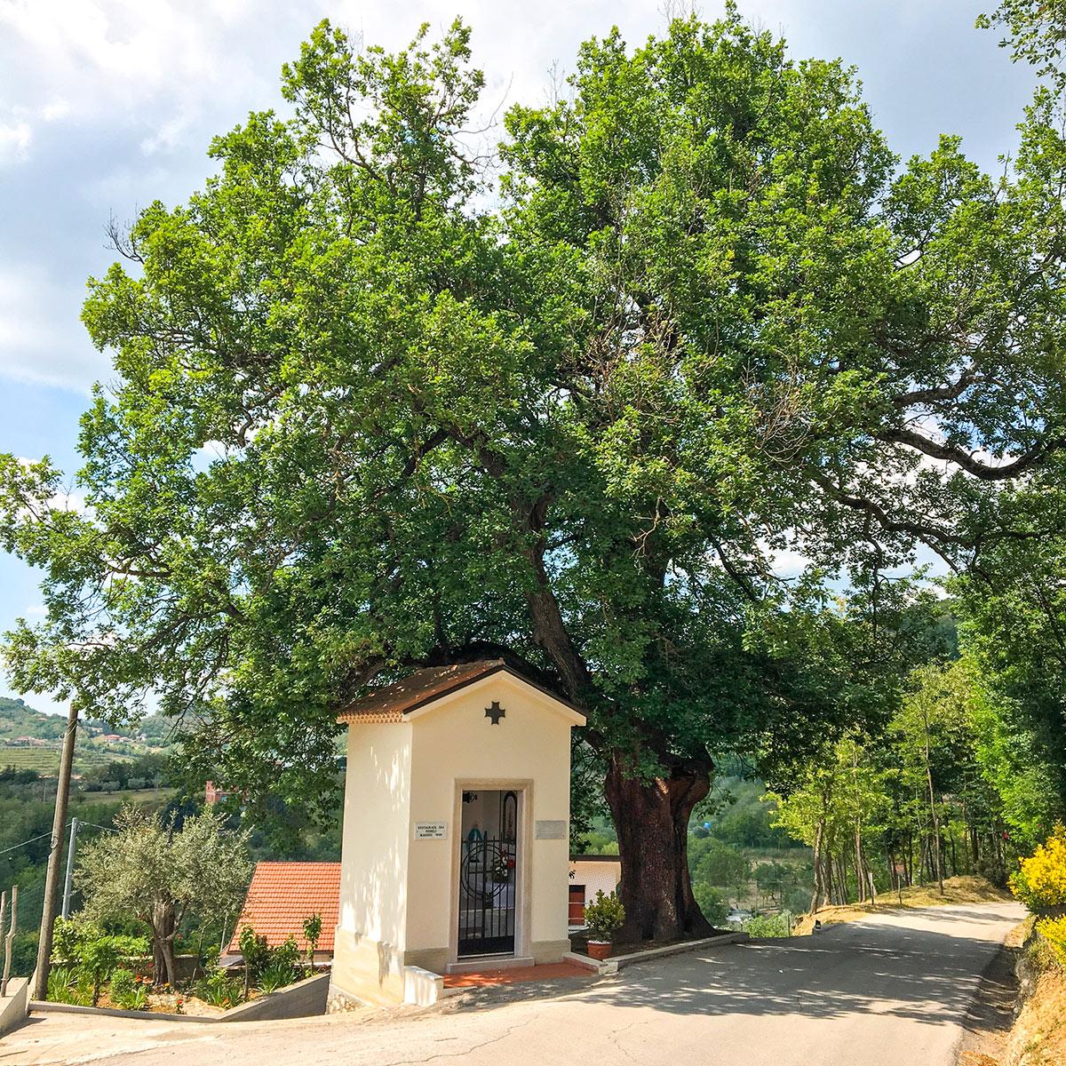cappellina e quercia secolare valleluogo Ariano Irpino